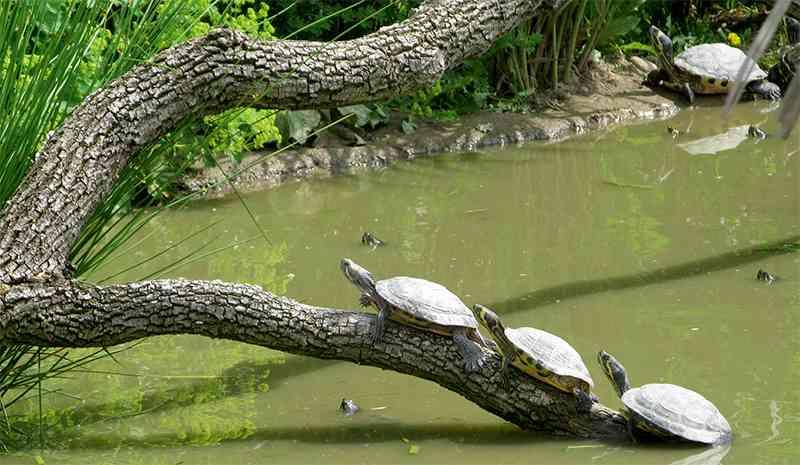 ... Schildkröten oder Wildkatzen.