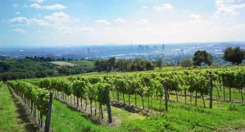 Cobenzl 38A: Auf die Besucher wartet am Latisberg nicht nur ein Gastgarten mit einem erstaunlichen Ausblick über Wien, im nahen Wienerwald ist es außerdem angenehm kühl. Foto: Ma49wiki CC-BY-SA 3.0