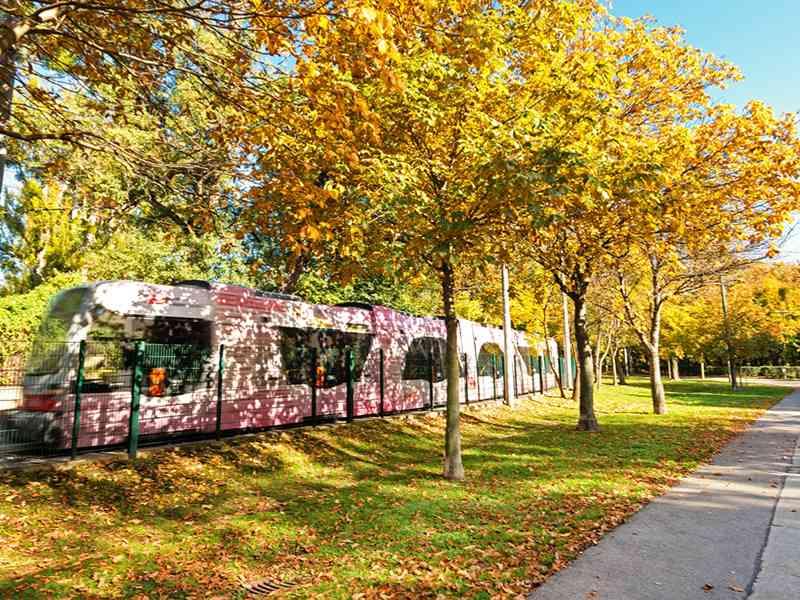 Im Herbst beeindruckt die Prater Hauptallee besonders durch  ihr leuchtendes Farbenspiel.