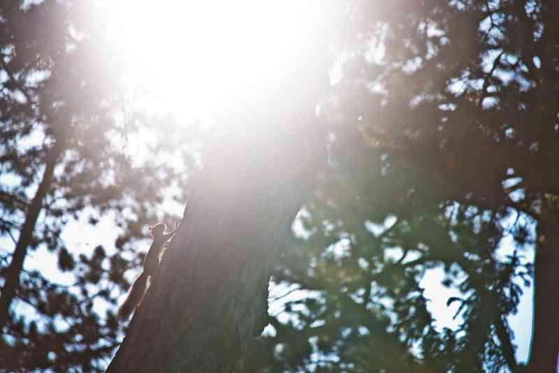 Eichhörnchen springen im Türkenschanzpark von Baum zu Baum