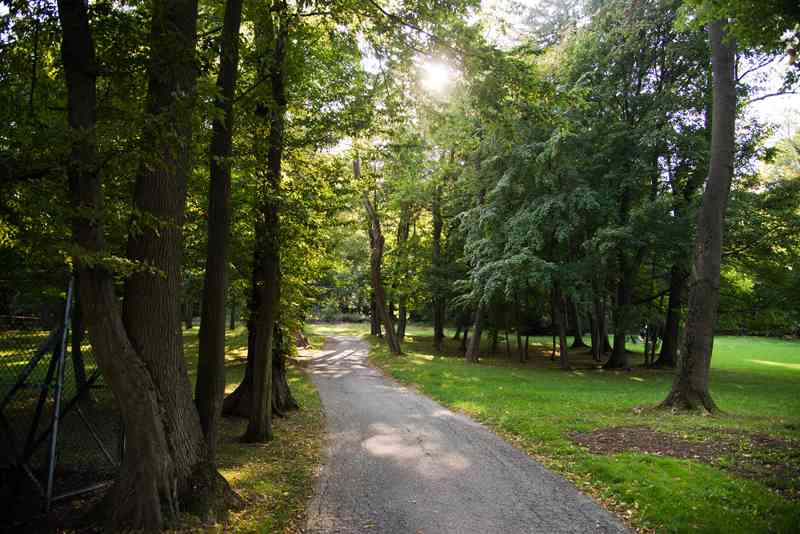 Der Pötzleinsdorfer Schlosspark besteht zu einem großen Teil aus Waldflächen.