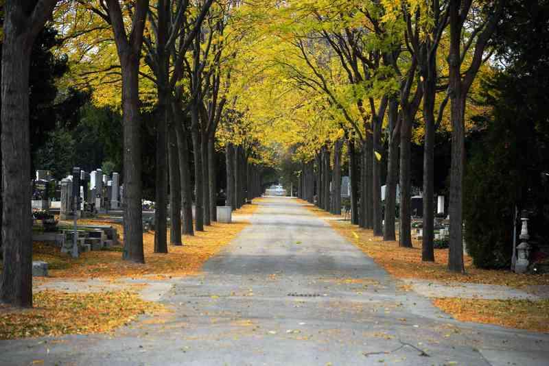 Wenn der Herbst im Zentralfriedhof Einzug hält, dann kehrt Farbe ein.