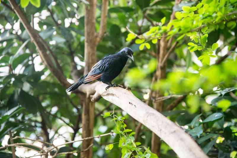 Auch Vögel sind im Haus des Meeres zu finden.