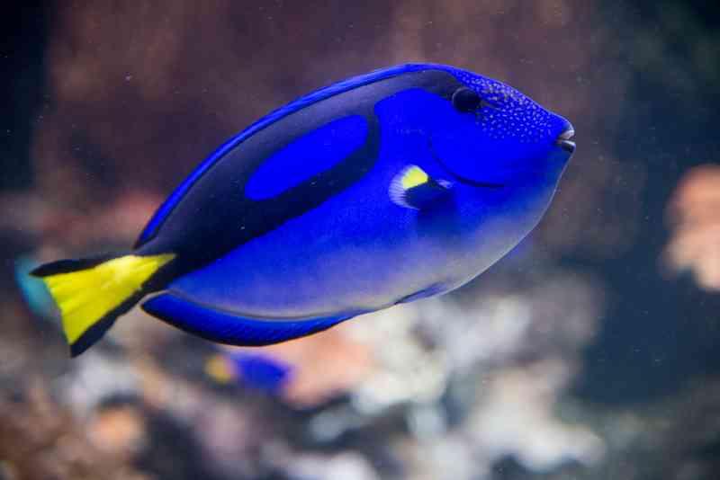 Über 10.000 verschiedene Tiere leben im Haus des Meeres.