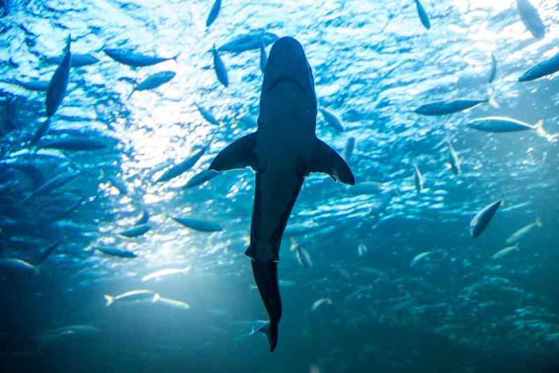Im Haus des Meeres gibt es kleine Haie zu sehen.