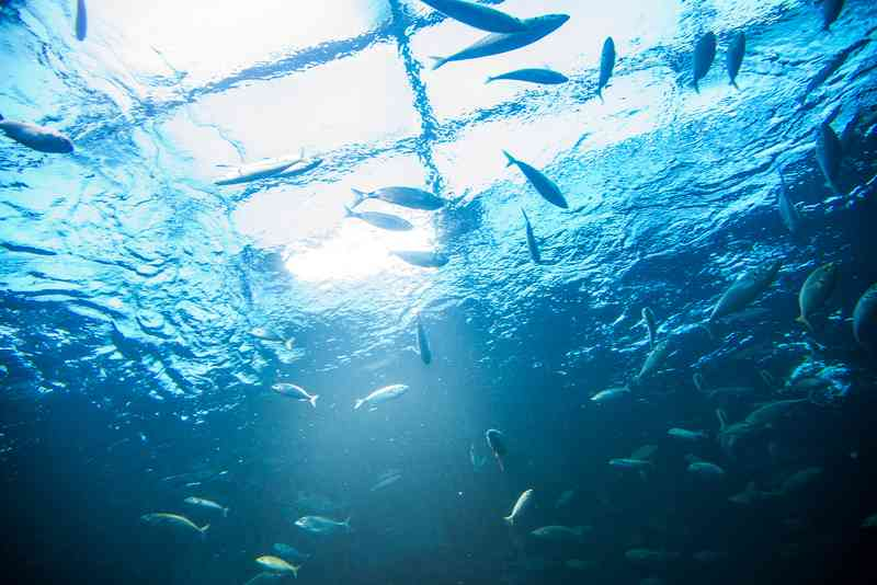 Der Glastunnel, in dem über einem Fische schwimmen, ist ein Highlight im Haus des Meeres.