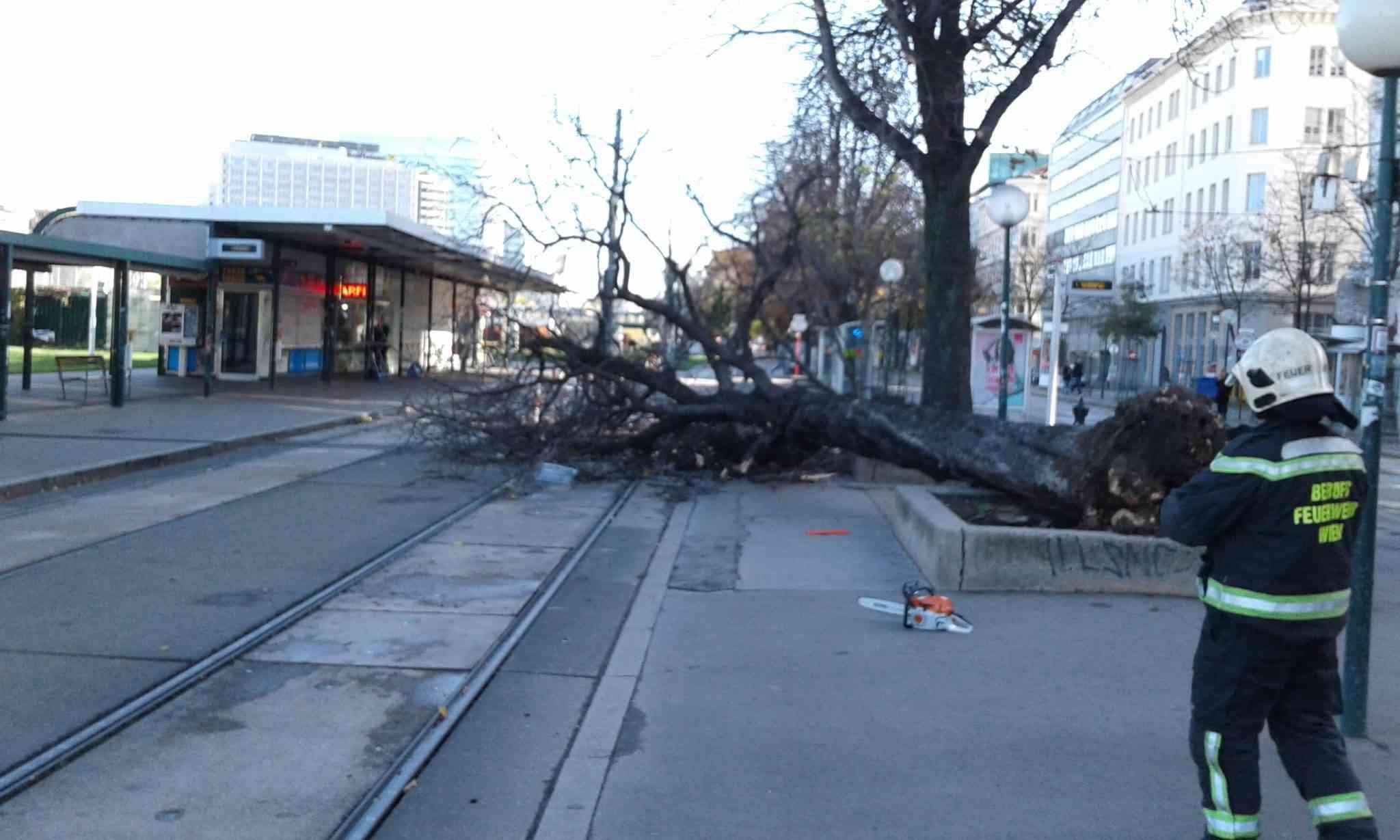 Ein historisches Fotodokument der Störung: Dieser Baum fiel im Oktober 2017 aufs Straßenbahngleis und hielt die Linie 31 drei Stunden lang auf.
